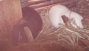 Minnie und Merlin