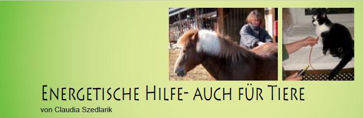Titel Tierenergetik Artikel